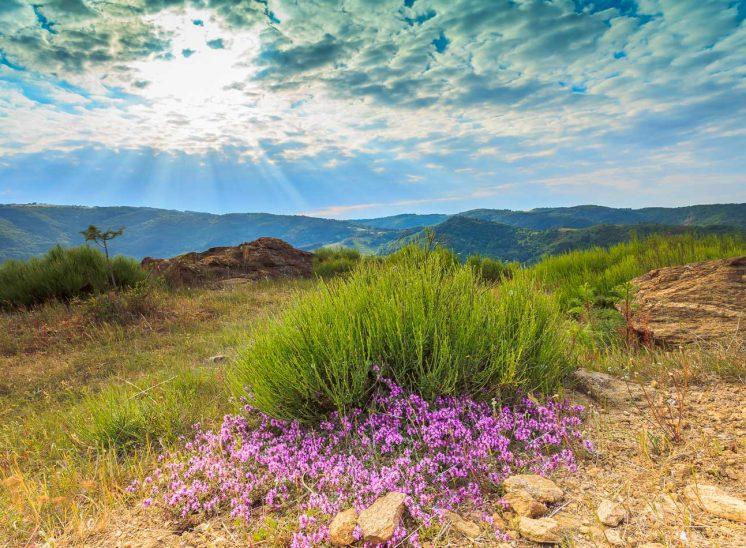 L'été dans les gorges de l'Allier