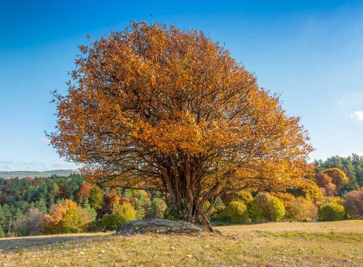 L'automne en Auvergne