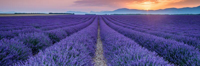 Le Début de l'été en Provence