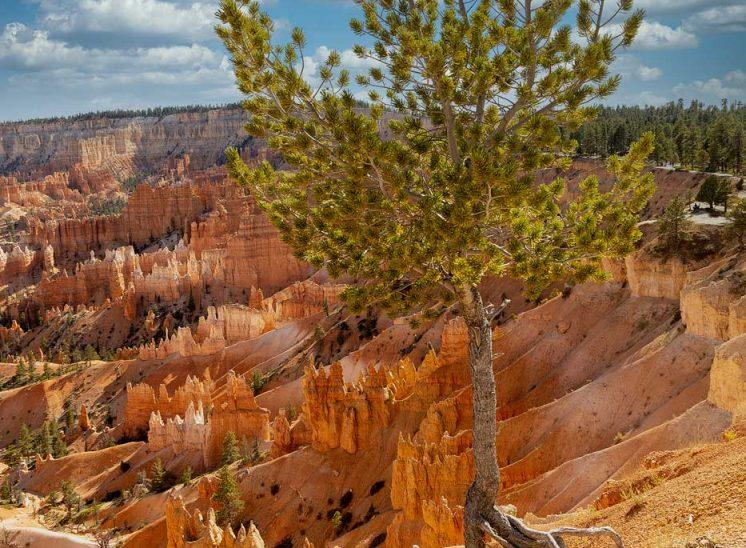 Bryce- Canyon